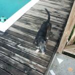 Der alte, graue Hund von Speyside, Tobago