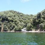 Bird-island Togago