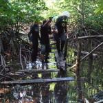 Gang durch die Mangroven