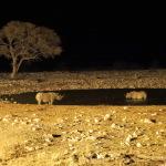 Nashörner nachts am Wasserloch