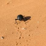 Tok-Tok Käfer von hinten