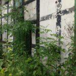 Lost Place Habichtshöhe